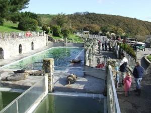 helston-seal-sanctuary